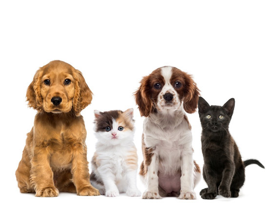 Pet Ear Clinic | Pet Allergy | Pet Dermatologist | Veterinary Dermatologist | VetDERM Clinic