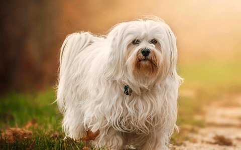 For veterinarians - intradermal allergy testing services from VetDERM Clinic