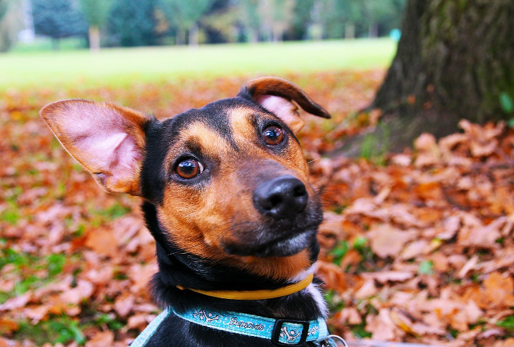 Dog Ear Care: How and When to Carefully Clean Your Dog's Ears | VetDERM Clinic