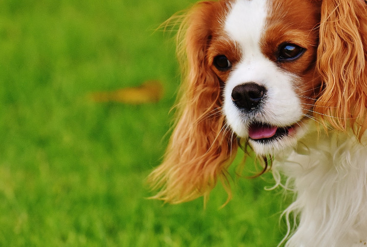 Ask an Expert: Dog Ear Infections | VetDERM Clinic