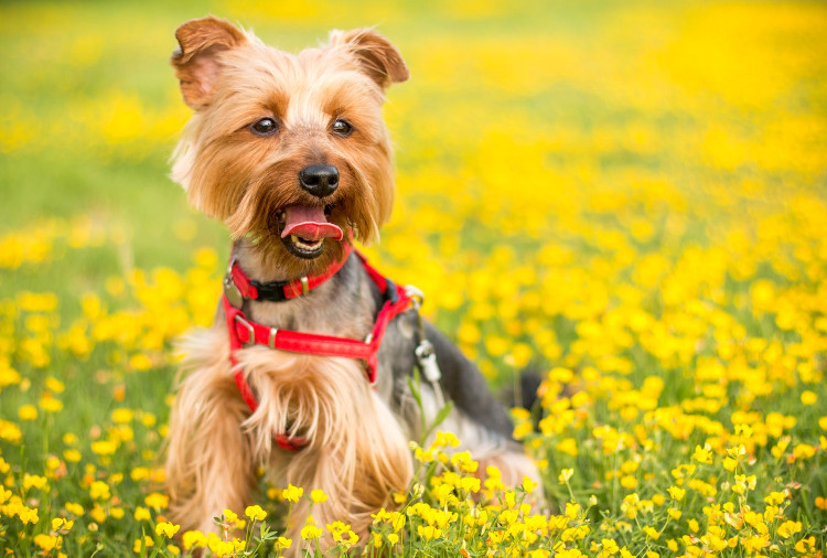 13 Signs Your Dog Has Pollen Allergies | VetDERM Clinic