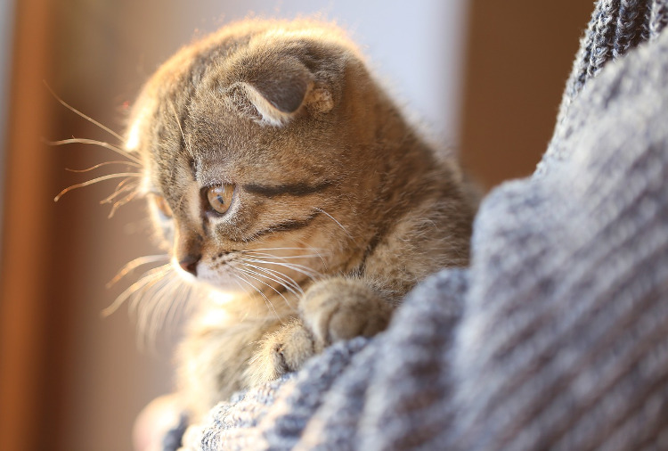 The Most Common Ear Problems Cats Can Have | VetDERM Clinic