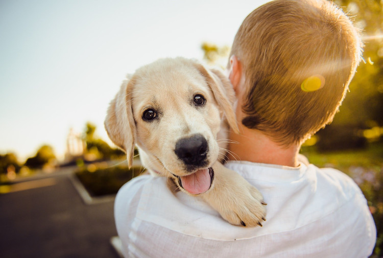 Why You Shouldn't Leave Pet Allergies Undiagnosed | VetDERM Clinic