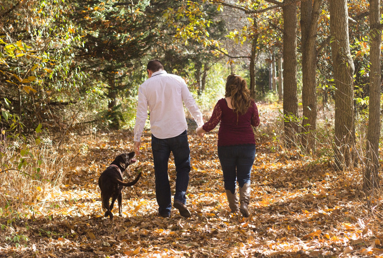 When Do Allergies in Pets Appear? What is a Pet's Allergy Season? | VetDERM Clinic
