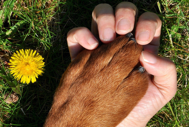 Summer is here, and so are dog allergens! Is allergy the reason for my dog's itchiness? | VetDERM Clinic